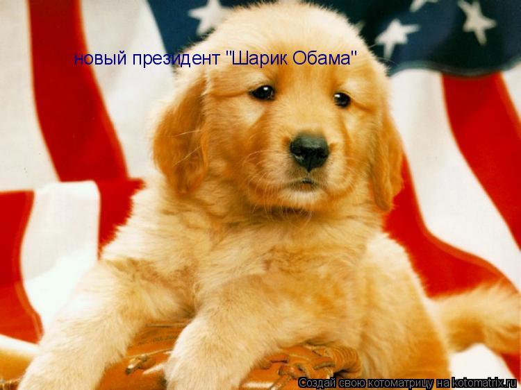"""Котоматрица: новый президент """"Шарик Обама"""""""