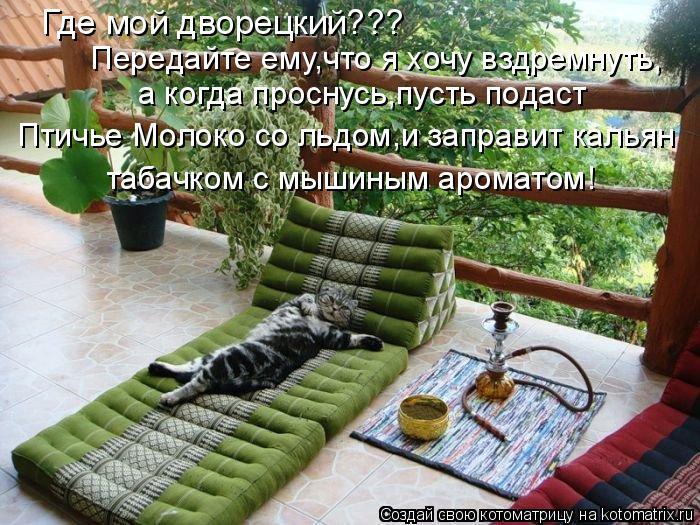 Котоматрица: Где мой дворецкий??? Передайте ему,что я хочу вздремнуть, а когда проснусь,пусть подаст  Птичье Молоко со льдом,и заправит кальян табачком с