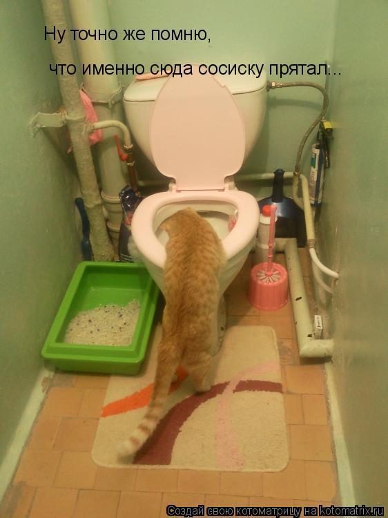 Котоматрица: Ну точно же помню,  что именно сюда сосиску прятал...