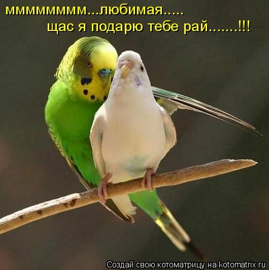 Котоматрица: мммммммм...любимая..... щас я подарю тебе рай.......!!!