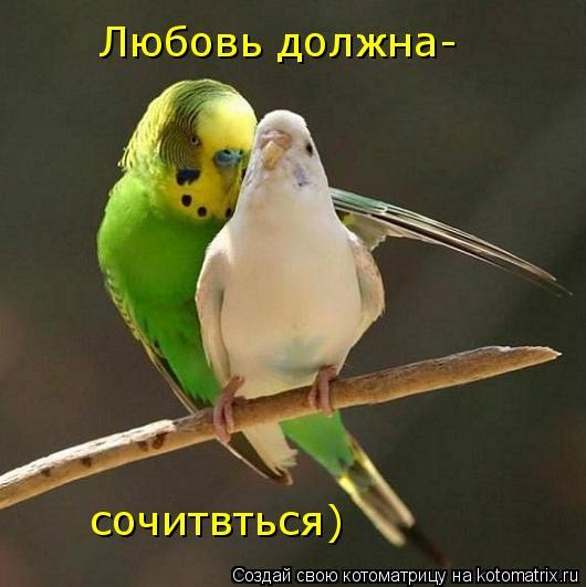 Котоматрица: Любовь должна- сочитвться)