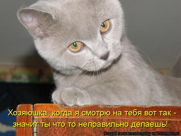 Котоматрица: Хозяюшка, когда я смотрю на тебя вот так - значит ты что то неправильно делаешь!