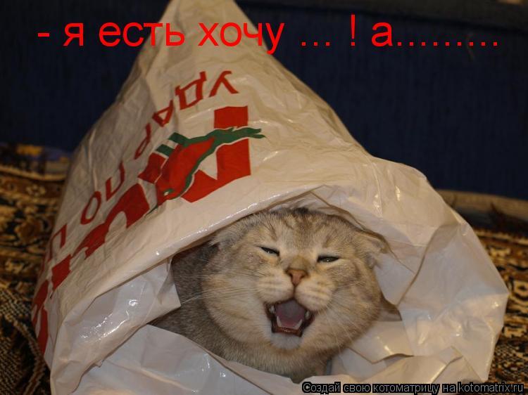Котоматрица: - я есть хочу ... ! а.........