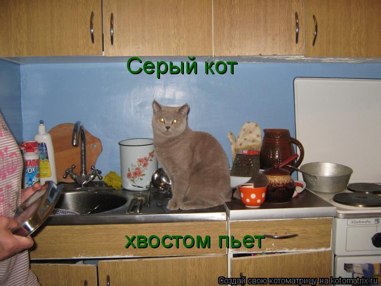 Котоматрица: Серый кот хвостом пьет