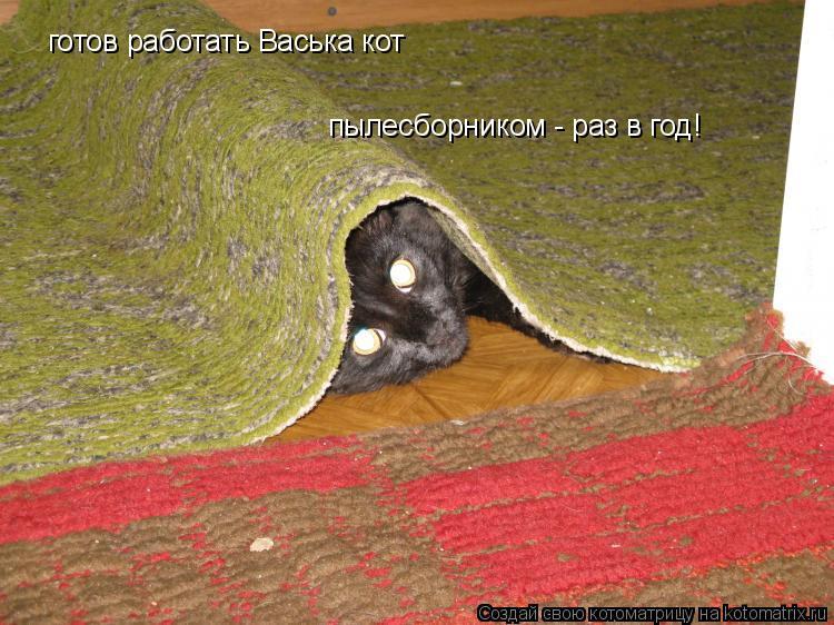 Котоматрица: готов работать Васька кот пылесборником - раз в год!