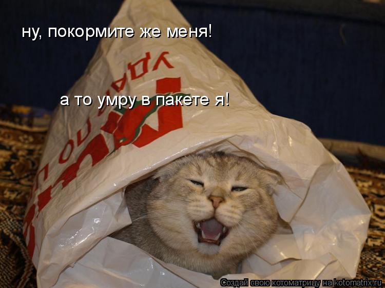 Котоматрица: ну, покормите же меня! а то умру в пакете я!