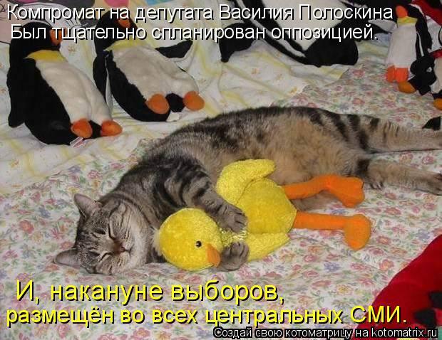 Котоматрица: Компромат на депутата Василия Полоскина Был тщательно спланирован оппозицией. И, накануне выборов, размещён во всех центральных СМИ.