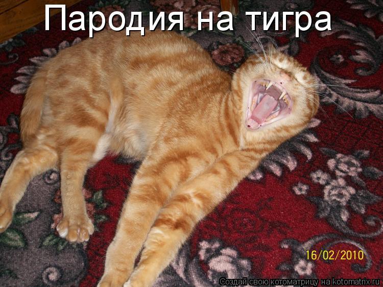Котоматрица: Пародия на тигра