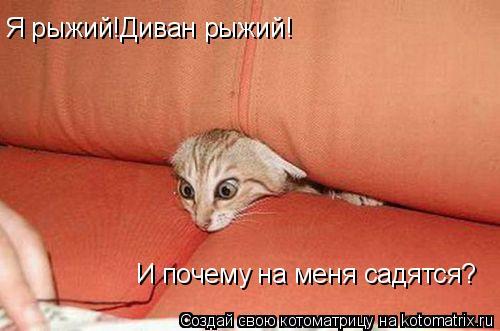 Котоматрица: Я рыжий!Диван рыжий! И почему на меня садятся? И почему на меня садятся?