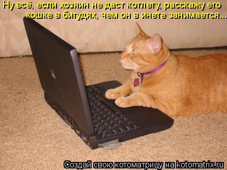Котоматрица: Ну всё, если хозяин не даст котлету, расскажу его кошке в бигудях, чем он в инете занимается...