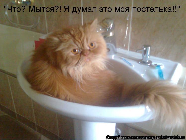 """Котоматрица: """"Что? Мытся?! Я думал это моя постелька!!!"""""""