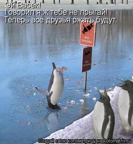 Котоматрица: Эй Васёк!  Говорил я ж тебе не прыгай! Теперь все друзья ржать будут.