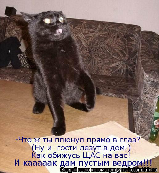 Котоматрица: -Что ж ты плюнул прямо в глаз? (Ну и  гости лезут в дом!) Как обижусь ЩАС на вас! И кааааак дам пустым ведром!!!