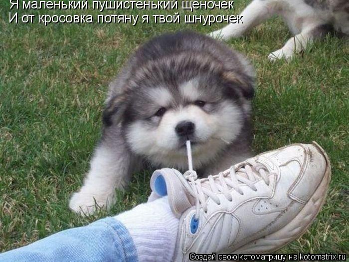 Котоматрица: Я маленький пушистенький щеночек И от кросовка потяну я твой шнурочек