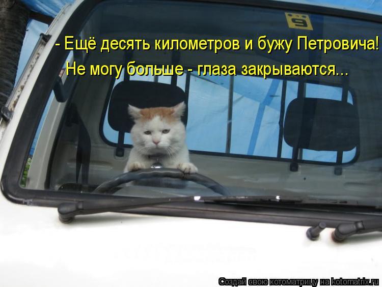 Котоматрица: - Ещё десять километров и бужу Петровича! Не могу больше - глаза закрываются...