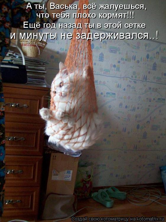 Котоматрица: А ты, Васька, всё жалуешься, что тебя плохо кормят!!! Ещё год назад ты в этой сетке и минуты не задерживался..!