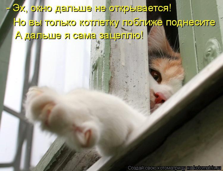 Котоматрица: А дальше я сама зацеплю! - Эх, окно дальше не открывается!  Но вы только котлетку поближе поднесите