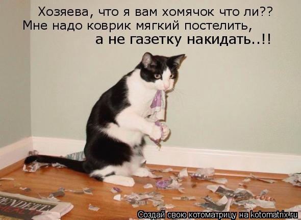 Котоматрица: Хозяева, что я вам хомячок что ли?? Мне надо коврик мягкий постелить, а не газетку накидать..!!