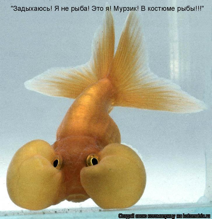 """Котоматрица: """"Задыхаюсь! Я не рыба! Это я! Мурзик! В костюме рыбы!!!"""""""