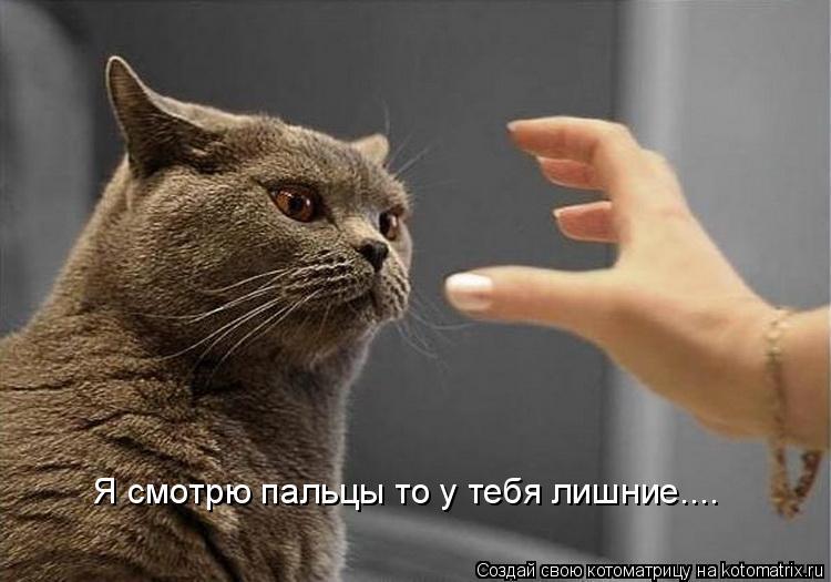 Котоматрица: Я смотрю пальцы то у тебя лишние....