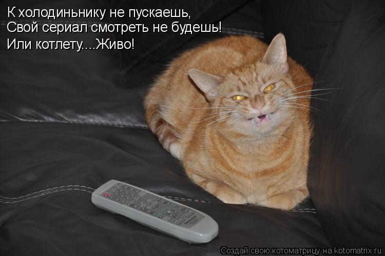 Котоматрица: К холодиньнику не пускаешь, Свой сериал смотреть не будешь! Или котлету....Живо!