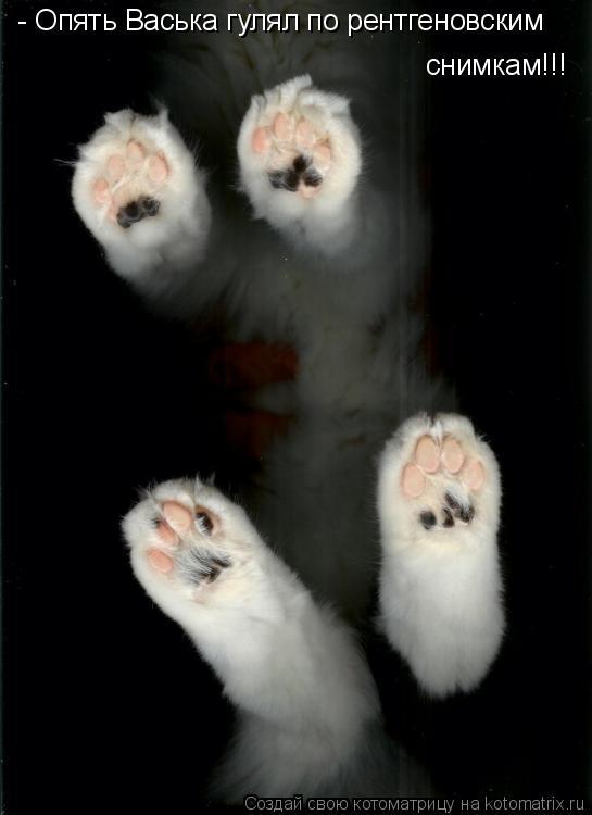 Котоматрица: - Опять Васька гулял по рентгеновским снимкам!!!