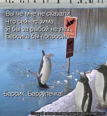 Котоматрица: Вы чё мне не сказали,  Что сейчас зима.... Я бы за рыбой не лез.. Барсика бы попросил.... -Барсик..Барсулечка!....