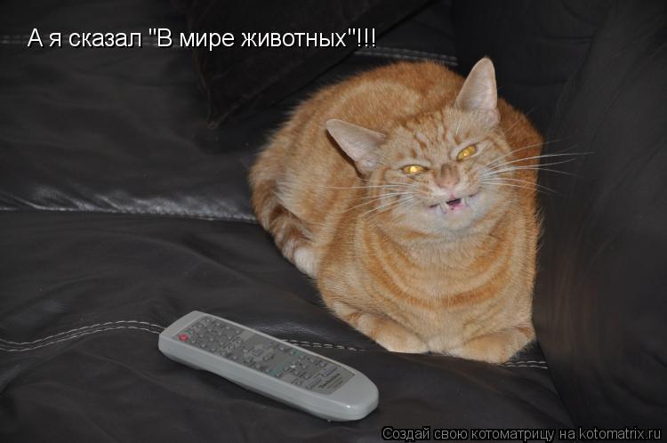 """Котоматрица: А я сказал """"В мире животных""""!!!"""