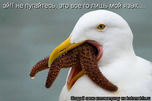 Котоматрица: эй!! не пугайтесь, это все го лишь мой язык....