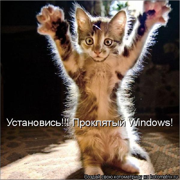 Котоматрица: Установись!!! Проклятый Windows!