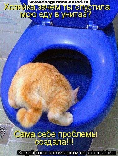 Котоматрица: Хозяйка,зачем ты спустила мою еду в унитаз? Сама себе проблемы создала!!!