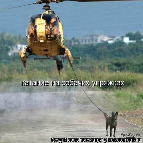 Котоматрица: катание на собачих упряжках
