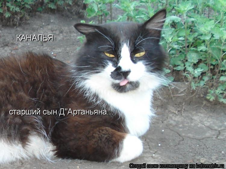 """Котоматрица: КАНАЛЬЯ старший сын Д""""Артаньяна..."""