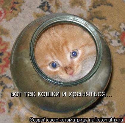 Котоматрица: вот так кошки и храняться...