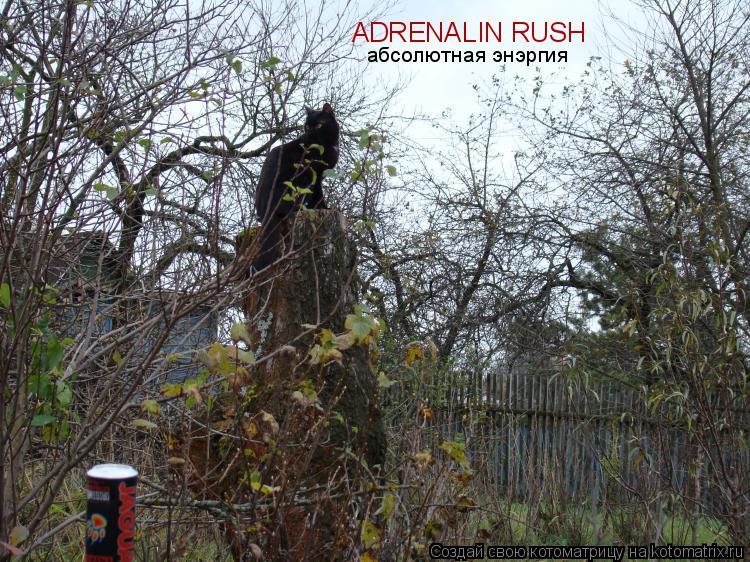 Котоматрица: ADRENALIN RUSH  абсолютная энэргия