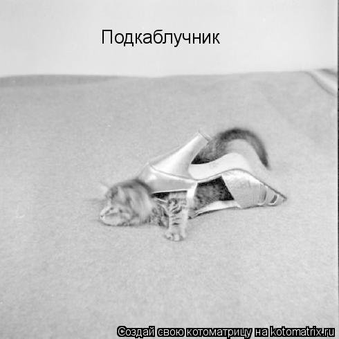 Котоматрица: Подкаблучник