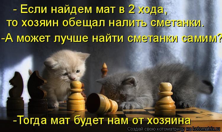 Котоматрица: - Если найдем мат в 2 хода, то хозяин обещал налить сметанки. -А может лучше найти сметанки самим? -Тогда мат будет нам от хозяина