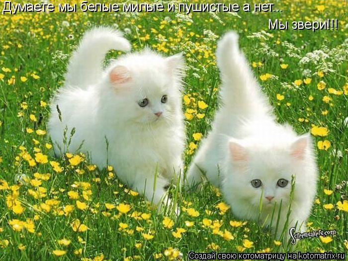 Котоматрица: Думаете мы белые милые и пушистые а нет...  Мы звери!!!
