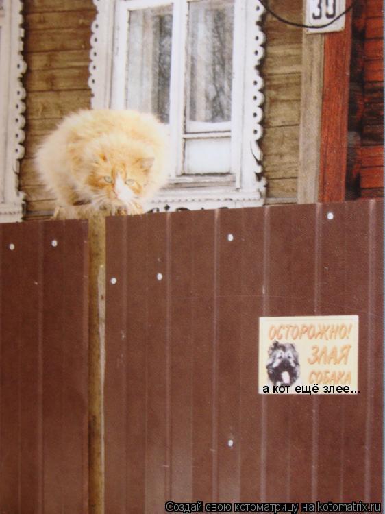 Котоматрица: а кот ещё злее...