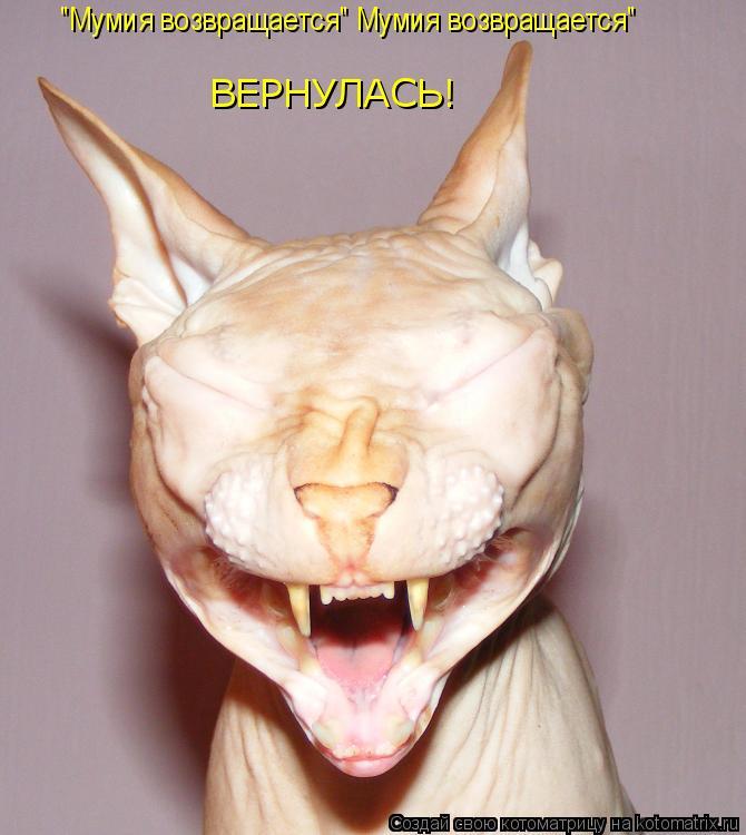 "Котоматрица: ""Мумия возвращается"" Мумия возвращается"" ВЕРНУЛАСЬ!"