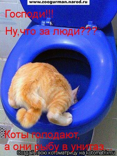 Котоматрица: Господи!!! Ну,что за люди??? Коты голодают, а они рыбу в унитаз...