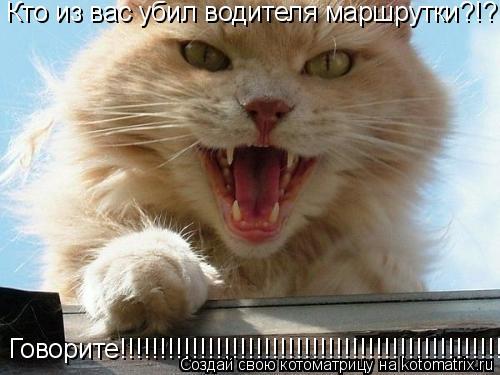 Котоматрица: Кто из вас убил водителя маршрутки?!? Говорите!!!!!!!!!!!!!!!!!!!!!!!!!!!!!!!!!!!!!!!!!!!!!!!!!!!!!!