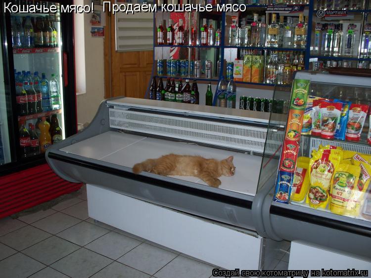 Котоматрица: Кошачье мясо! Продаём кошачье мясо