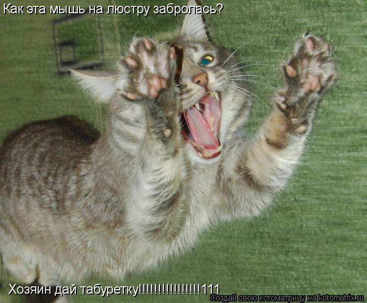 Котоматрица: Как эта мышь на люстру забролась? Хозяин дай табуретку!!!!!!!!!!!!!!!!111