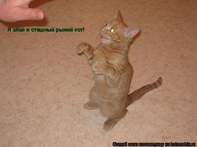 Котоматрица: Я злой и сташный рыжий кот!
