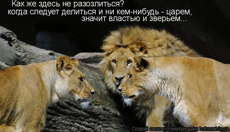 Котоматрица: Как же здесь не разозлиться? когда следует делиться и ни кем-нибудь - царем, значит властью и зверьем...