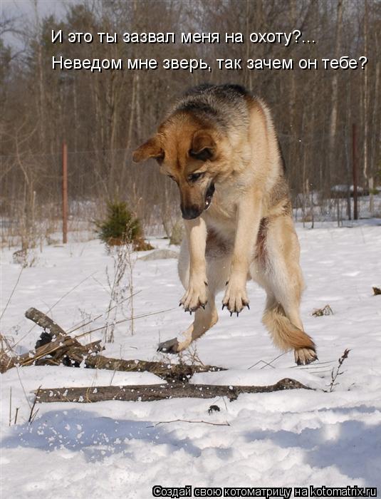 Котоматрица: И это ты зазвал меня на охоту?... Неведом мне зверь, так зачем он тебе?
