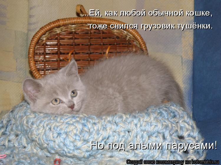 Котоматрица: ...Ей, как любой обычной кошке, тоже снился грузовик тушёнки. Но под алыми парусами!