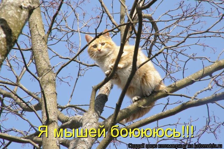 Котоматрица: Я мышей боюююсь!!!
