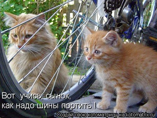 Котоматрица: Вот  учись, сынок,  как надо шины портить !